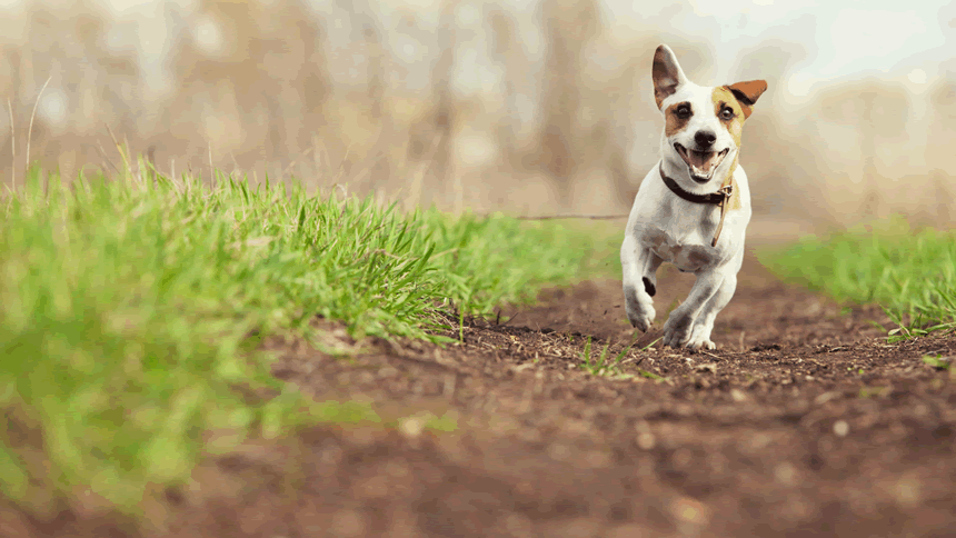 Free Pet Care While You Travel - 20% off membership for Volunteer & Charity Workers
