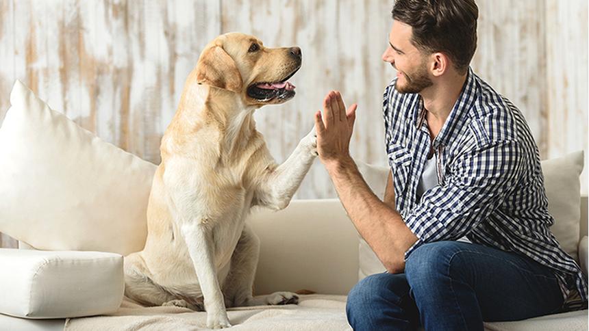Compare Pet Insurance - Get cheap pet insurance