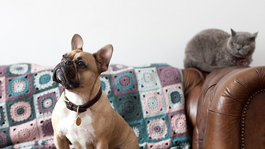 Co-op Pet Insurance - 20% off when you buy online + a free pet Hamper