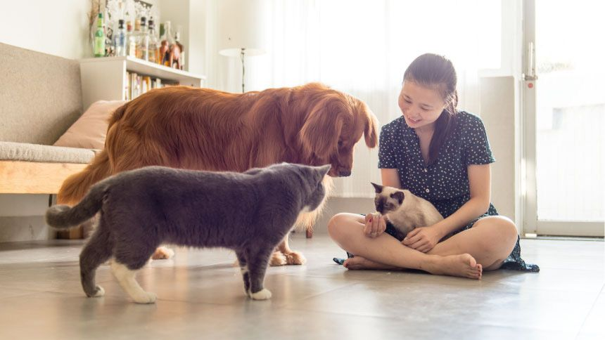 Jollyes - The Pet People - 10% Volunteer & Charity Workers discount on Pet Food & Accessories