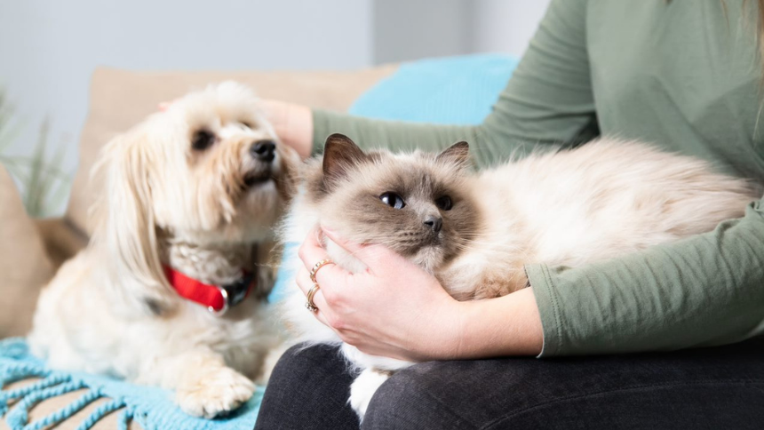 Dog and Cat Food Delivery - 20% Volunteer & Charity Workers discount